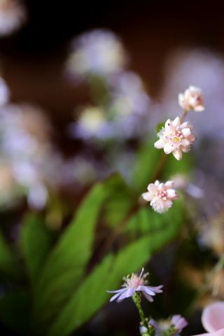 Le triomphe des fleurs