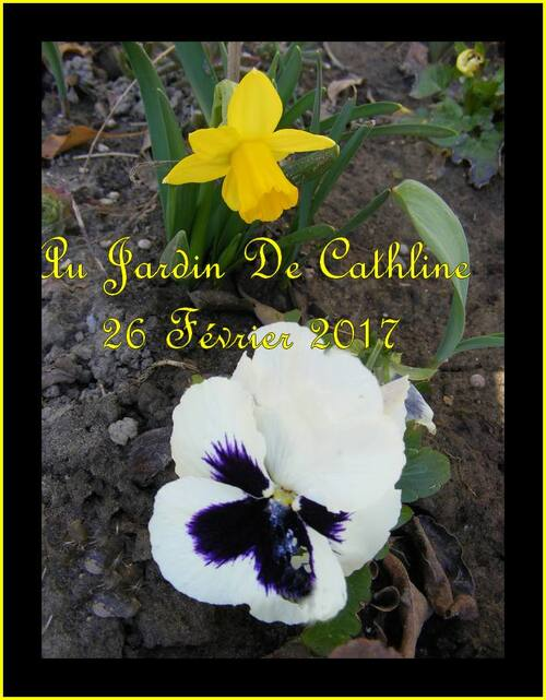 Jardiner avec la lune du 1er au 10 Mars