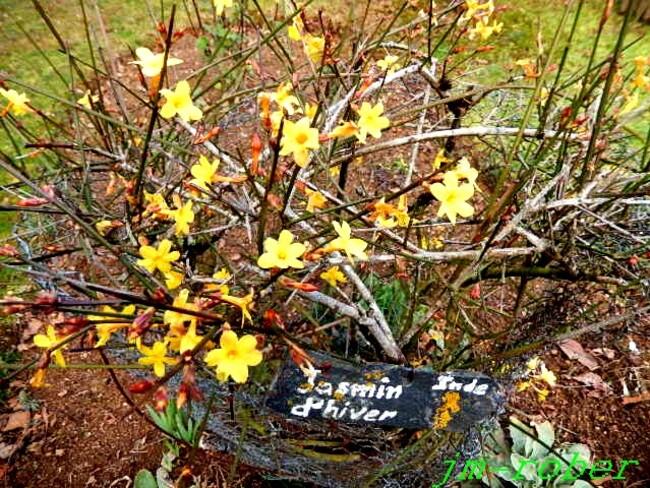 Février et déjà les premières fleurs au jardin