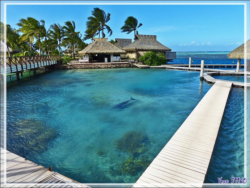 Mon coup de gueule : hôtel InterContinental Resort & Spa Moorea et ses dauphins captifs - Polynésie française