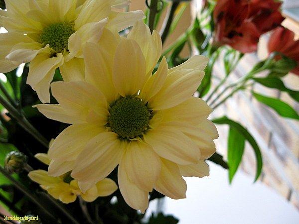 Fleurs-1294.JPG