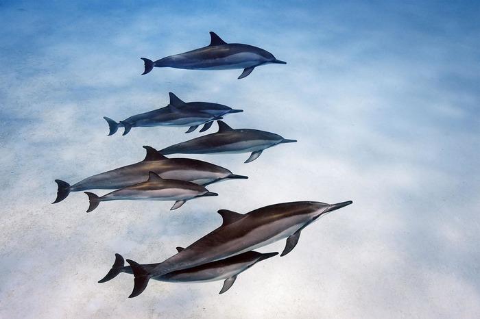 Redécouvrez les dauphins des superbes photos