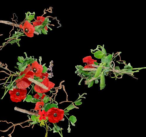 natali_garden_cluster6a.png