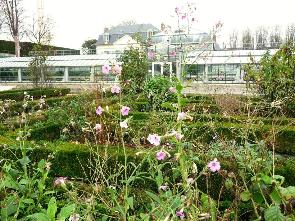 Jardin des plante, décembre 2015