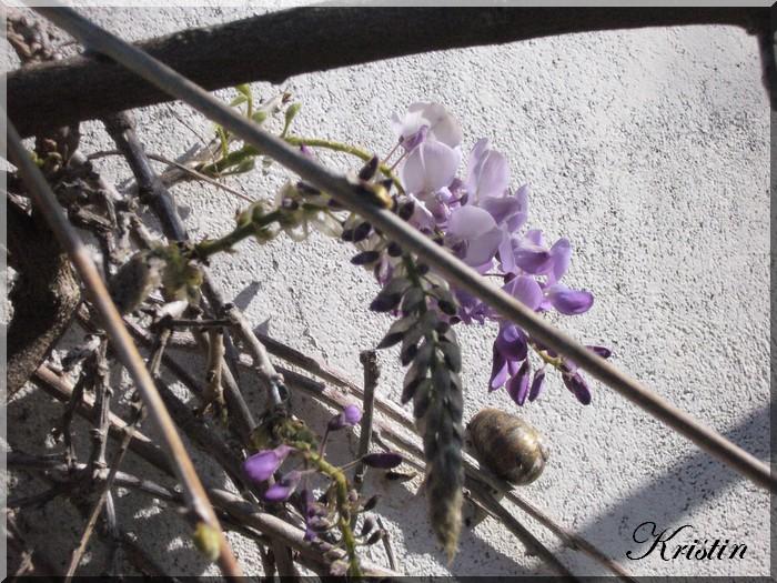 Petites fleurs d'avril