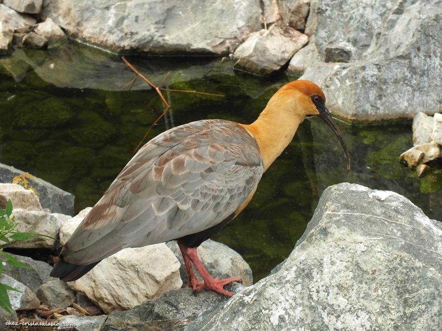 Un bel oiseau...