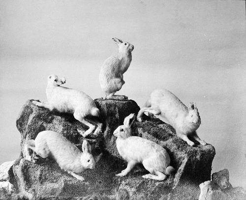 06 - Des histoires de lapins en photos, suite