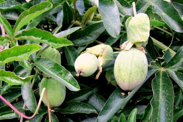 E7 - Fruits