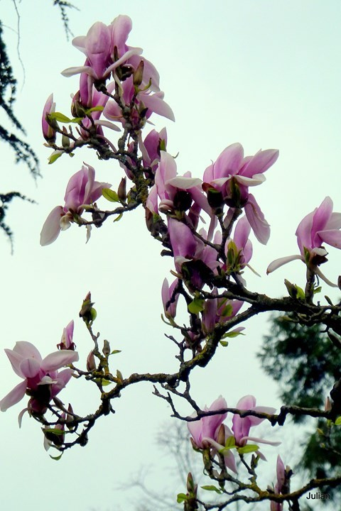 AZ14---Branches-et-fleurs.JPG