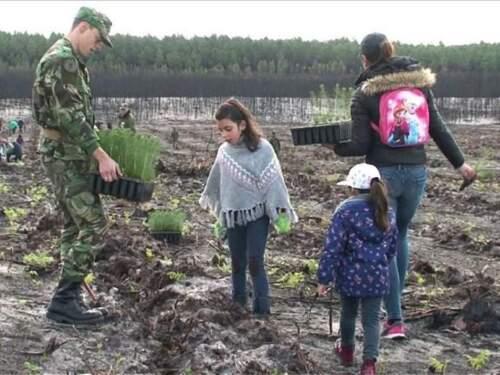 PORTUGAL : 67 500 ARBRES ONT ÉTÉ PLANTÉS EN UNE MATINÉE
