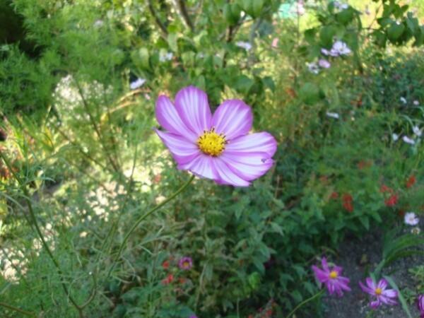 Giverny, le jardin de Monet 9q
