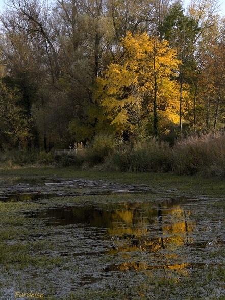 Flamboiement d'automne