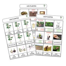 Petites bêtes et plantes