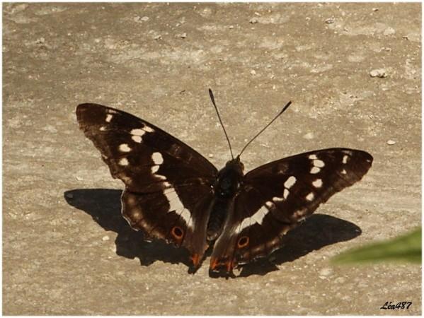 Papillons-2482-le-grand-mars.jpg