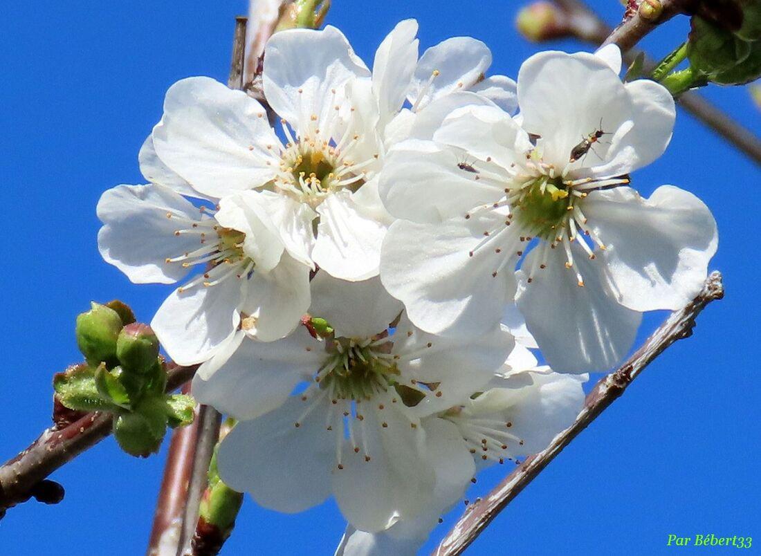 nos fleurs du jardin -3