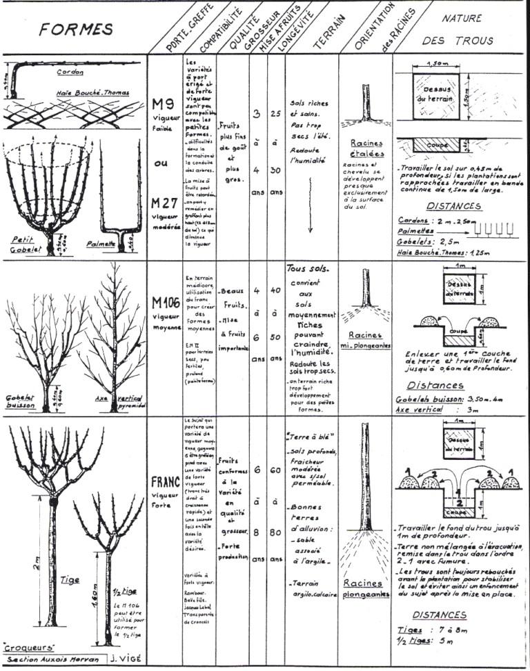 Greffage d 39 arbres fruitiers services la personne od61170 - Distance plantation arbre maison ...