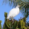 Les canaries - Fuerteventura - 3