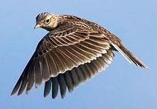 Les Oiseaux par monts et par vaux