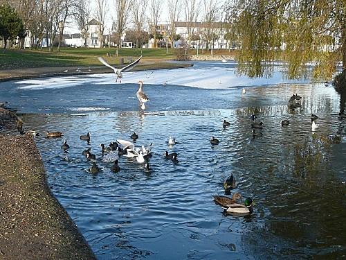 Parc-paysager-Lac-gele-3-12-10-P1160467.JPG