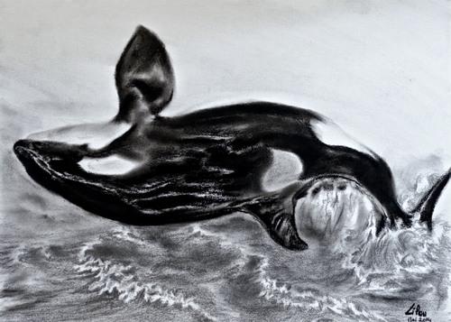 Saut de l'orque