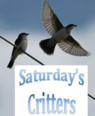 viewingnaturewitheileen.;;saturdays-critters;