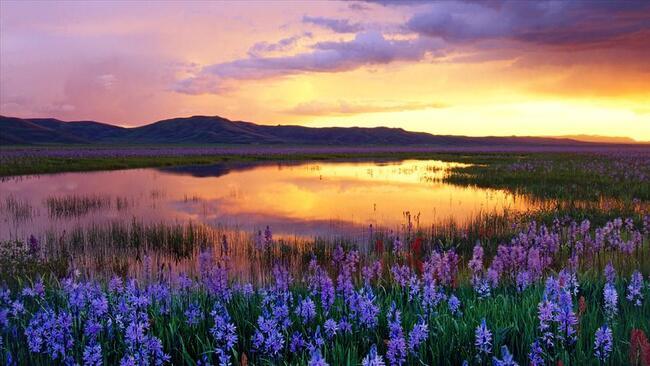 Beauté de la nature