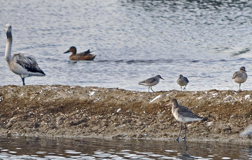 Promenade ornithologique...