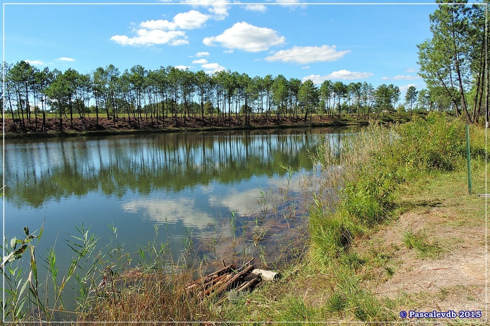 L'étang de Surgenne - Septembre 2015 - 3/10