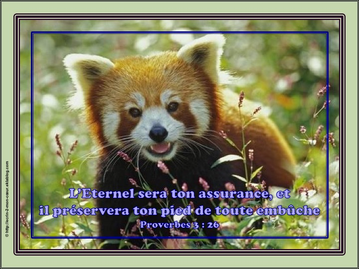L'Eternel sera ton assurance - Proverbes 3 : 26