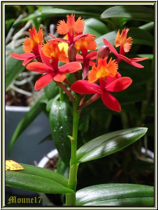Eposition d'orchidées à La Jarne (17) le 09 e 10 mars 2019