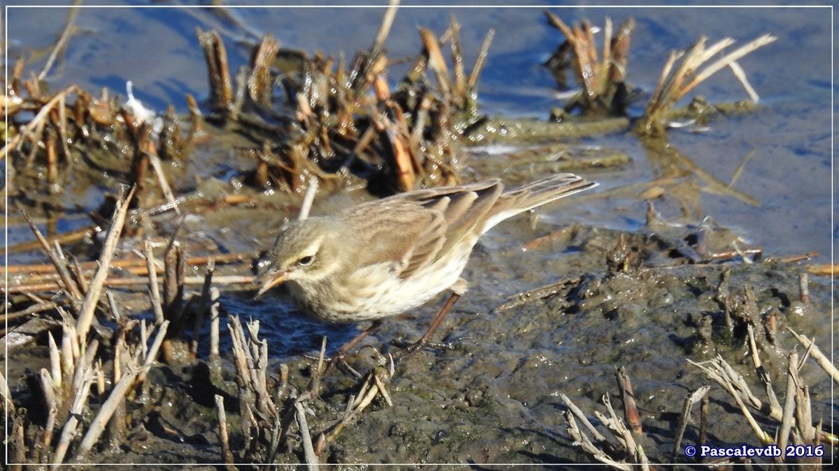 Réserve ornitho du Teich - Octobre 2016 - 3/11