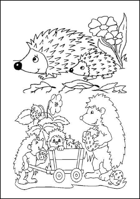 colorier les animaux de la forêt,coloriages éducatif magique