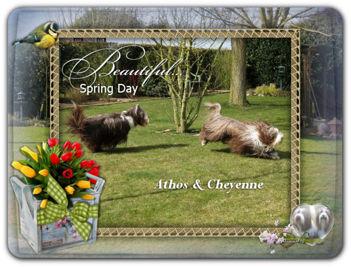 ♥ Athos & Cheyenne ♥ *photos mars 2015 *