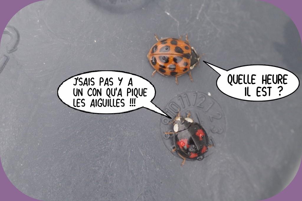 LA PAGE D'HUMOUR