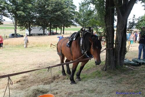 chevaux à lantin 2015