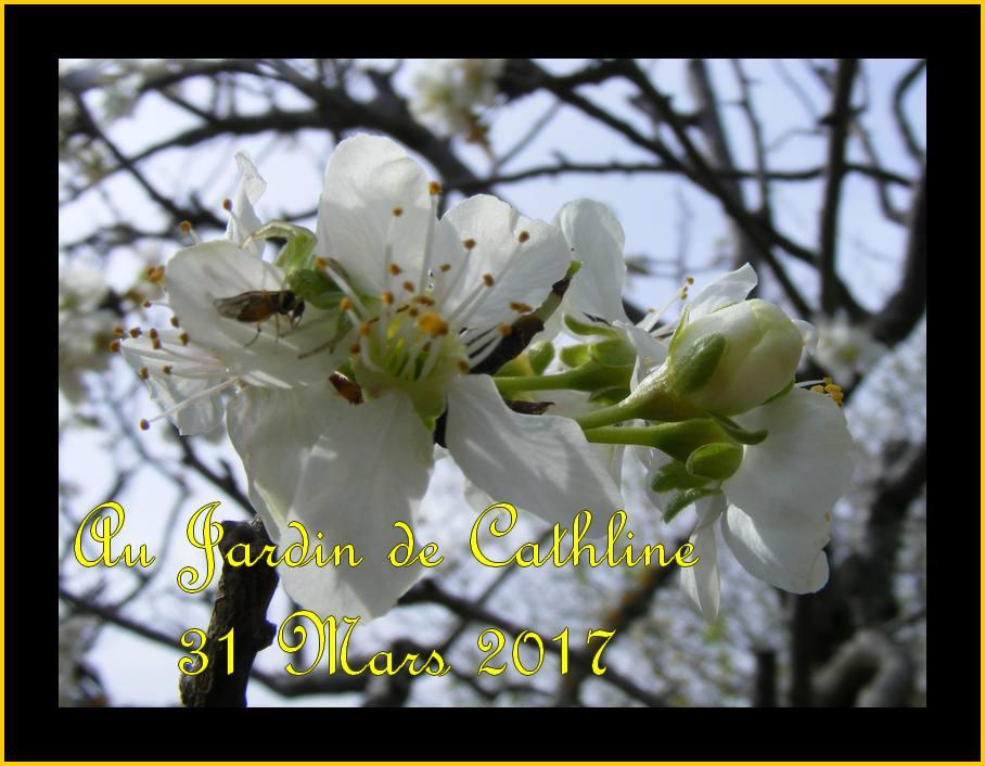 Fleurs de fruits (5)