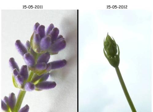 2012-05-16-001