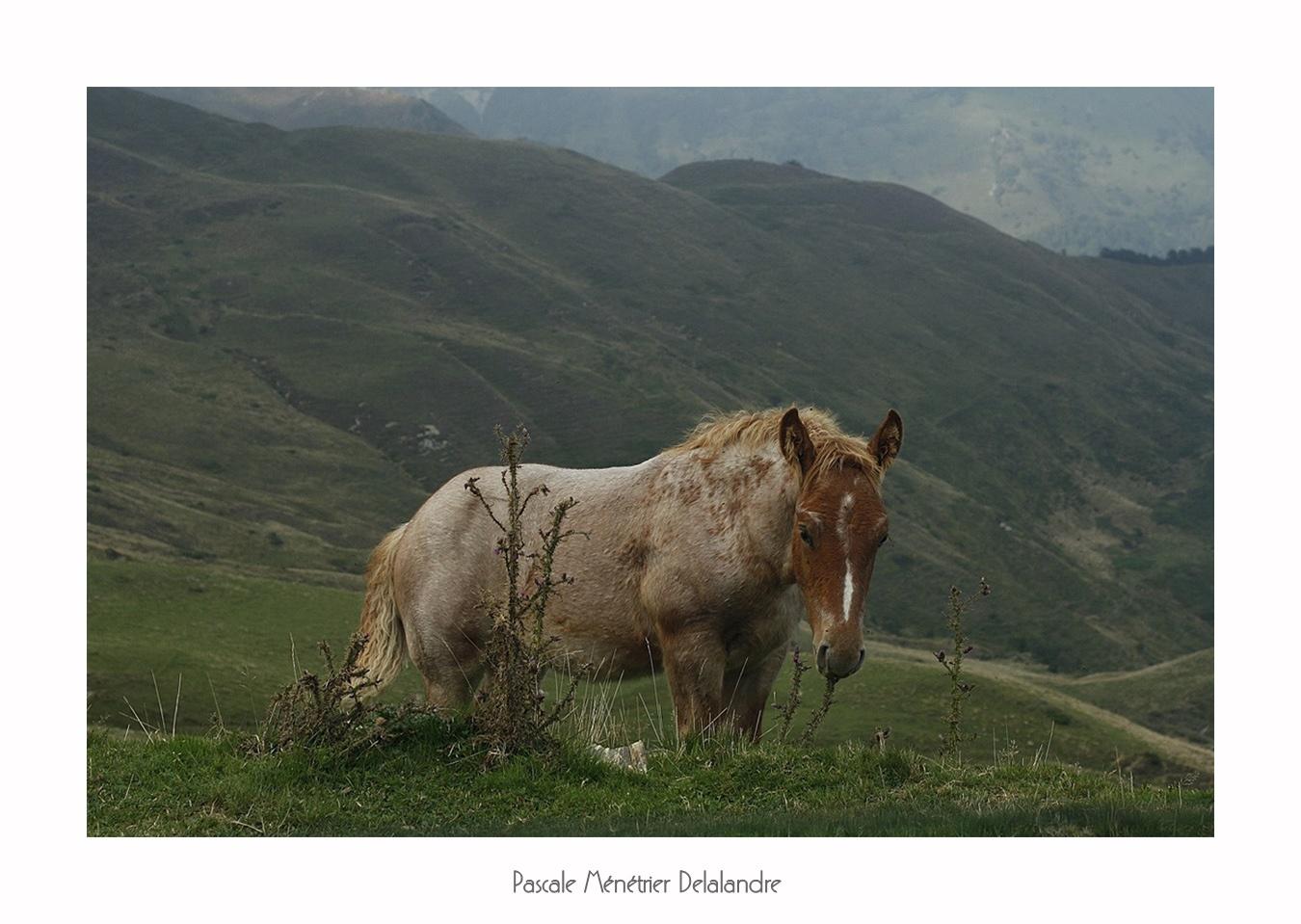 Dans les Pyrénées, ils sont partout sur les montagnes...