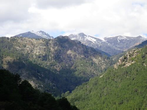 Onda - Savaggio