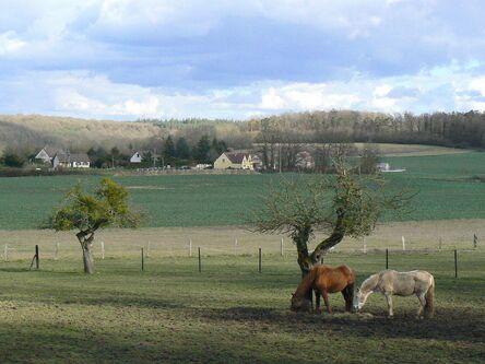 Le Bois de la Haie (En Février)