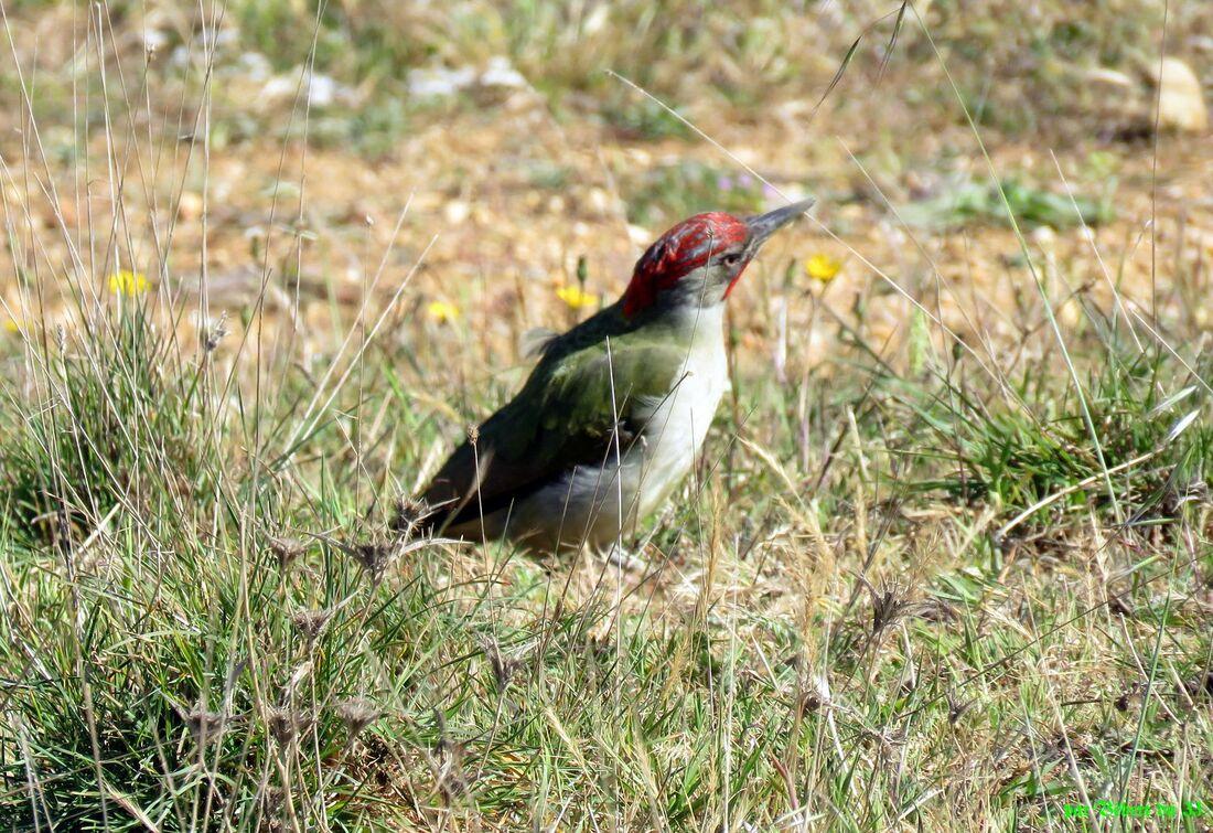 un bel oiseau à Falésia