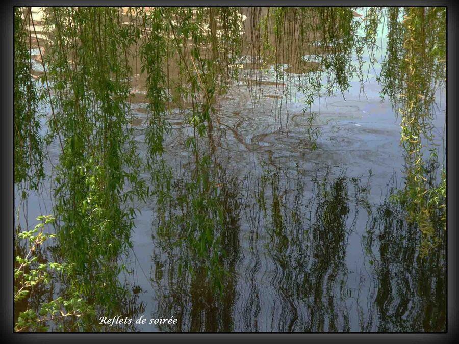 « Reflets et gouttes d'eau »