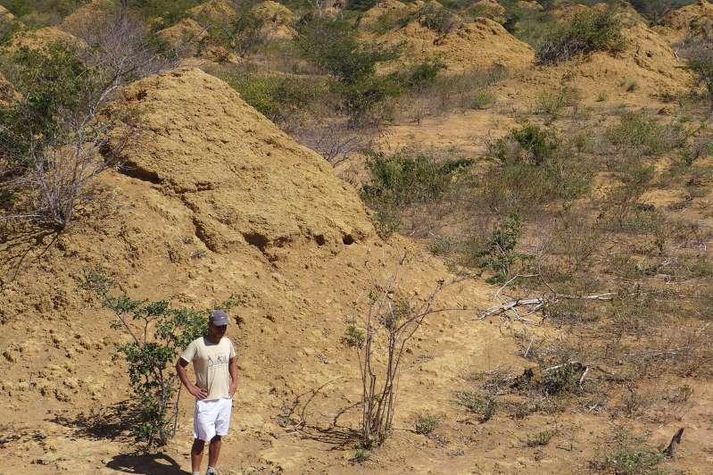 Découverte de structures « construites » par des termites aussi vastes que la Grande-Bretagne