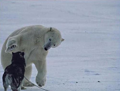 ours-jeux-chien-noir.jpg