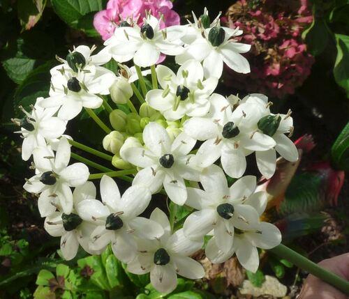 Ma fleur inconnue