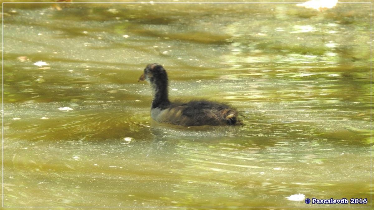 Réserve ornitho du Teich - Août 2016 - 4/12