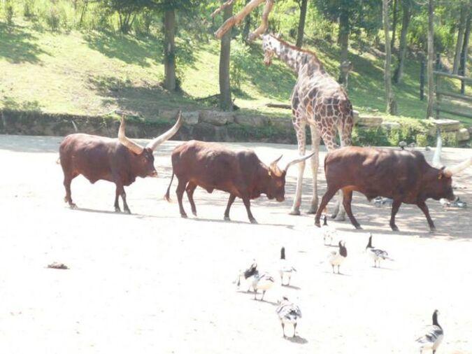 Nature, animaux : Pairi Daiza.