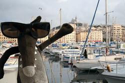 Loup à Marseille