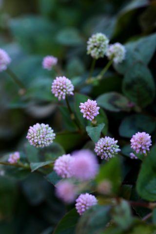 Jupe fleurie