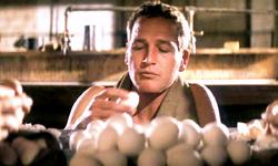Luke la main froide: Paul Newman